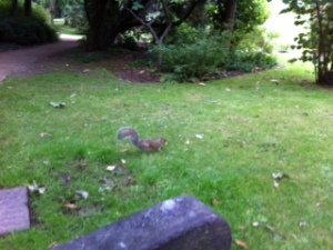 Squirrel in royal fort gardens
